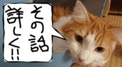 Instead tell the cat sticker #13489952