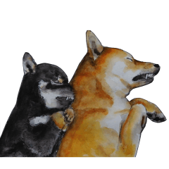 Shiba Inu Sisters and friends - 3