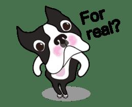 Animated Boston Terrier sticker #13501358