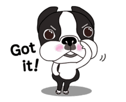 Animated Boston Terrier sticker #13501364