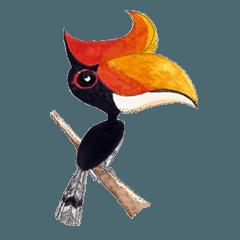 Picky Hornbill
