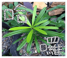 plant x 1995 sticker #13569014