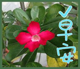 plant x 1995 sticker #13569015