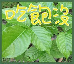 plant x 1995 sticker #13569017