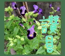plant x 1995 sticker #13569021