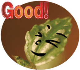 Chatting leaves sticker #13599073