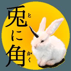 rabbit horn