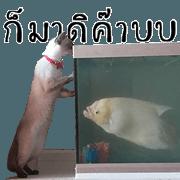 สติ๊กเกอร์ไลน์ ไอ่หน้าแมว และ ปลาแรด