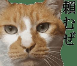 Iemitsu of the fatty cat sticker #13633997