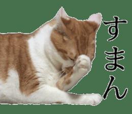 Iemitsu of the fatty cat sticker #13633999