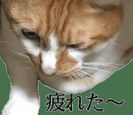 Iemitsu of the fatty cat sticker #13634002