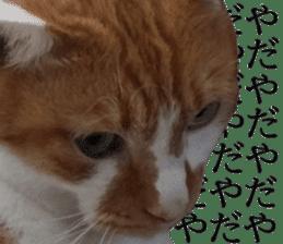 Iemitsu of the fatty cat sticker #13634009
