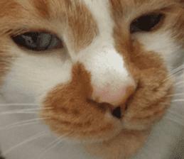 Iemitsu of the fatty cat sticker #13634011