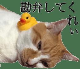Iemitsu of the fatty cat sticker #13634017