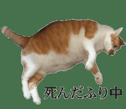 Iemitsu of the fatty cat sticker #13634018