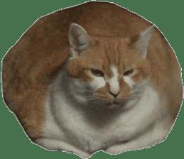 Iemitsu of the fatty cat sticker #13634022