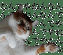 Iemitsu of the fatty cat sticker #13634023
