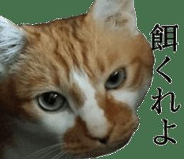 Iemitsu of the fatty cat sticker #13634024