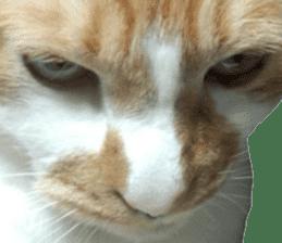 Iemitsu of the fatty cat sticker #13634025