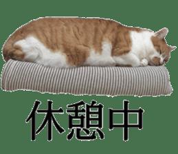 Iemitsu of the fatty cat sticker #13634026