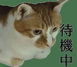 Iemitsu of the fatty cat sticker #13634028