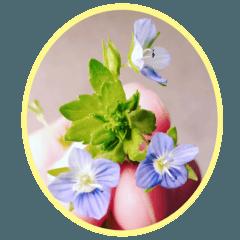 FLOWER MESSAGE(photo)