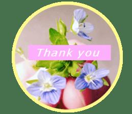 FLOWER MESSAGE(photo) sticker #13638278