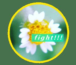 FLOWER MESSAGE(photo) sticker #13638281