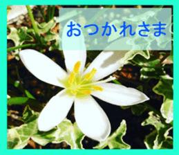 FLOWER MESSAGE(photo) sticker #13638282