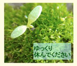 FLOWER MESSAGE(photo) sticker #13638283