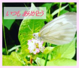 FLOWER MESSAGE(photo) sticker #13638284