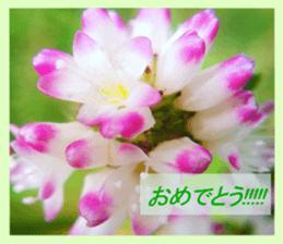FLOWER MESSAGE(photo) sticker #13638285