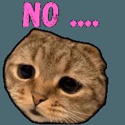 สติ๊กเกอร์ไลน์ Cat cute (v.1)