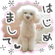 สติ๊กเกอร์ไลน์ toy poodle