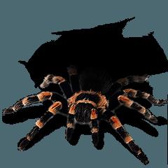 Spider Invasion phone has