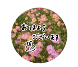 photo flower sticker sticker #13731182