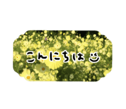 photo flower sticker sticker #13731183