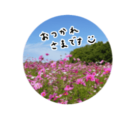 photo flower sticker sticker #13731184