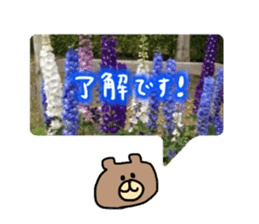 photo flower sticker sticker #13731187