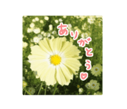 photo flower sticker sticker #13731190