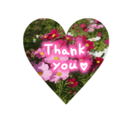 photo flower sticker sticker #13731191