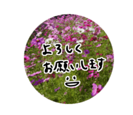 photo flower sticker sticker #13731192