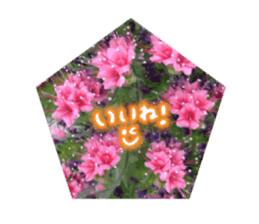 photo flower sticker sticker #13731193