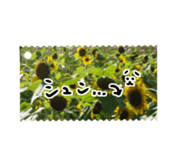 photo flower sticker sticker #13731196