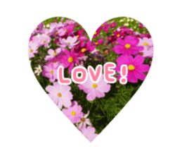 photo flower sticker sticker #13731197