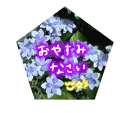 photo flower sticker sticker #13731204