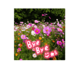 photo flower sticker sticker #13731205