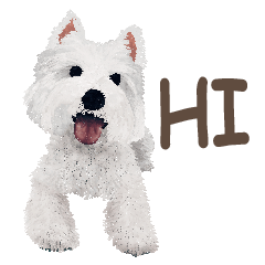westie QQ-White Terrier part 1