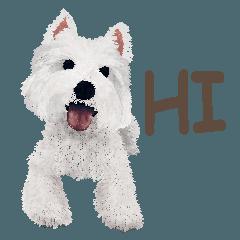 westie QQ-White Terrier part 1