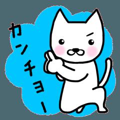 kancho-cat